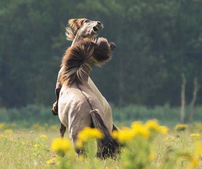 Kuva: Hans Veth, Unsplash.com