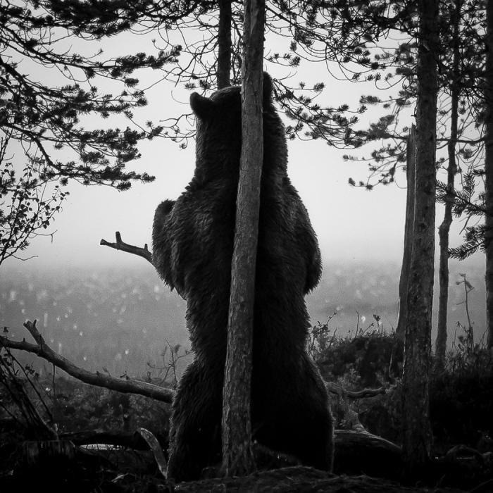 Kuva: Joni Valkila